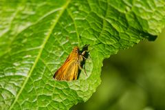 Small nice orange butterfly on green leaf royalty free stock images