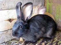 Small nice rabbits Stock Images