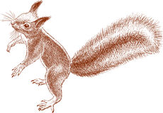 Small nimble squirrel Royalty Free Stock Images