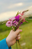 Small nosegay of wild flowers in a hand. On nature backgrounds stock image