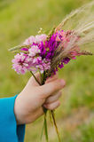 Small nosegay of wild flowers in a hand. On nature backgrounds stock images