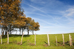 Small oak trees aligned in a fenced green grass field with blue sky Stock Photos