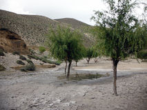 Small Oasis in Dry Himalayan Landscape Royalty Free Stock Photos