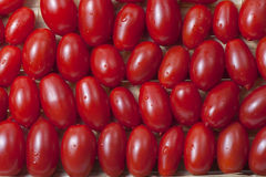 Small oblong red ripe tomatoes Stock Photo