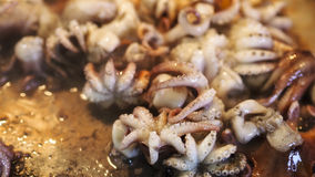 Small Octopus Cooked Stock Photography