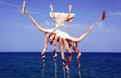 A small octopus drying in the sun Stock Photos