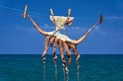 A small octopus drying in the sun Royalty Free Stock Image