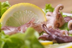 Small octopus on a plate with lemon and lettuce Stock Photos