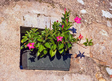 Small old house window with flower. Italian Village. Royalty Free Stock Images