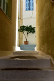 Small olive tree at the end of a narrow path Royalty Free Stock Photos