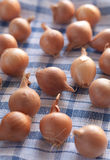 Small onions on a kitchen cloth Stock Image