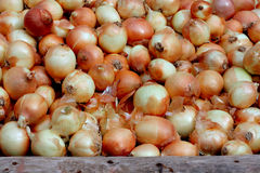 Small onions for sale. At street market Stock Photography