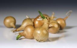 Small onions Royalty Free Stock Photo