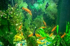 Bright green fishtank interior royalty free stock photography