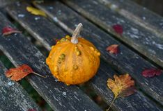 Small orange and green ornamental gourd on an old bench Stock Photography