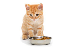 Small orange kitten eating Stock Photography
