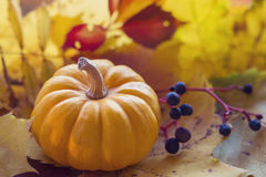 Small orange pumpkin and the leaves Stock Photography