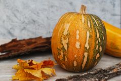 Small orange Pumpkin with maple leaves, halloween, autumn. Small orange Pumpkin with maple leaves, halloween Stock Images