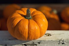 Small orange pumpkin with selective focus. For fall & autumn holidays royalty free stock image