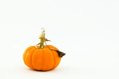Small orange pumpkin with whimsical, curly stem Royalty Free Stock Images