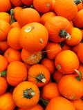 Small orange pumpkins Stock Images
