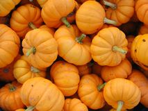Small, orange pumpkins grouped for sale stock image