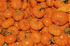 Small Orange Pumpkins Washington Royalty Free Stock Images