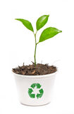 Small orange tree. Small orange tree potted in paper recycle pot isolated on white background Stock Photos