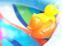 Small orange and yellow plastic duck toys floating on water. Royalty Free Stock Image