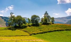 Small orchard on a grassy rural field. Lovely summer scenery in mountains Royalty Free Stock Photos