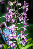 Small orchid blooming. Beautiful small orchid blooming in the plant market Stock Photography