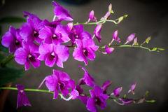 Small orchid blooming. Beautiful small orchid blooming in the plant market Stock Photos