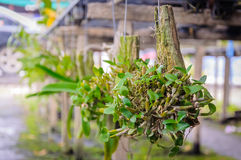 Small orchids hang on timber Stock Photos