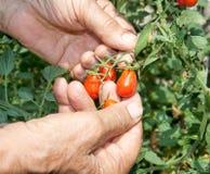 A small organic Stock Photo