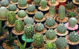 Small ornamental plants Royalty Free Stock Photography