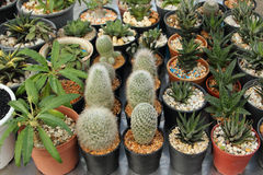 Small ornamental plants Stock Image