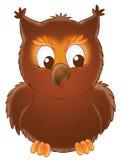 Small owl Royalty Free Stock Photos