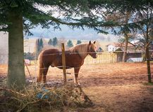 Small paddock in the village with one horse. In Germany stock photography