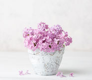 Small  pale pink bouquet of lilac  in clay  pot  against a white  wall Stock Image