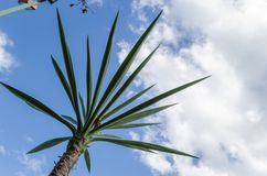 Small palm photographed from the bottom, clear sky. stock photos