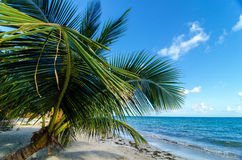 Small Palm Tree Stock Image