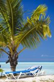 Young Palm Tree On Caribbean Beach, Antigua. A small palm tree on an Antiguan beach, turquoise water and blue sky in the background, a beach chair in the Royalty Free Stock Photo
