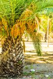 Small palm tree on beach Royalty Free Stock Photos