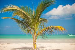 Small palm tree in the center of the photo Royalty Free Stock Photo