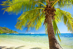 Small palm tree hanging over blue lagoon Royalty Free Stock Photography