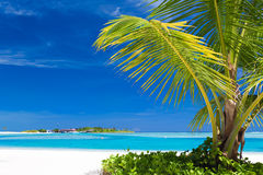Small palm tree hanging over blue lagoon Stock Image