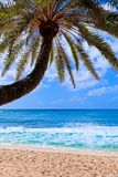 Small palm tree hanging over stunning blue lagoon Royalty Free Stock Image