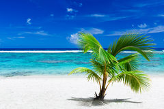 Small palm tree hanging over stunning blue lagoon Royalty Free Stock Photography