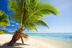 Small palm tree hanging over stunning lagoon Royalty Free Stock Photo