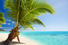Small palm tree hanging over stunning lagoon Royalty Free Stock Image